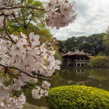 HSinjuku Park Tea House - Hanami 2017 - Tokyo