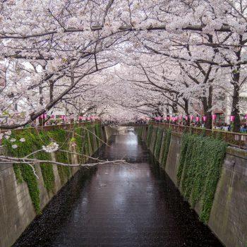 Meguro River (2) - Hanami 2017 - Tokyo