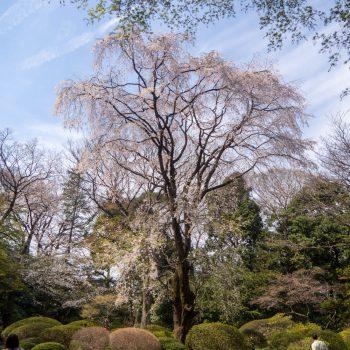 Rikugien Garden - Hanami 2017 - Tokyo