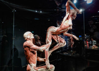 Body World Amsterdam - Pays-Bas